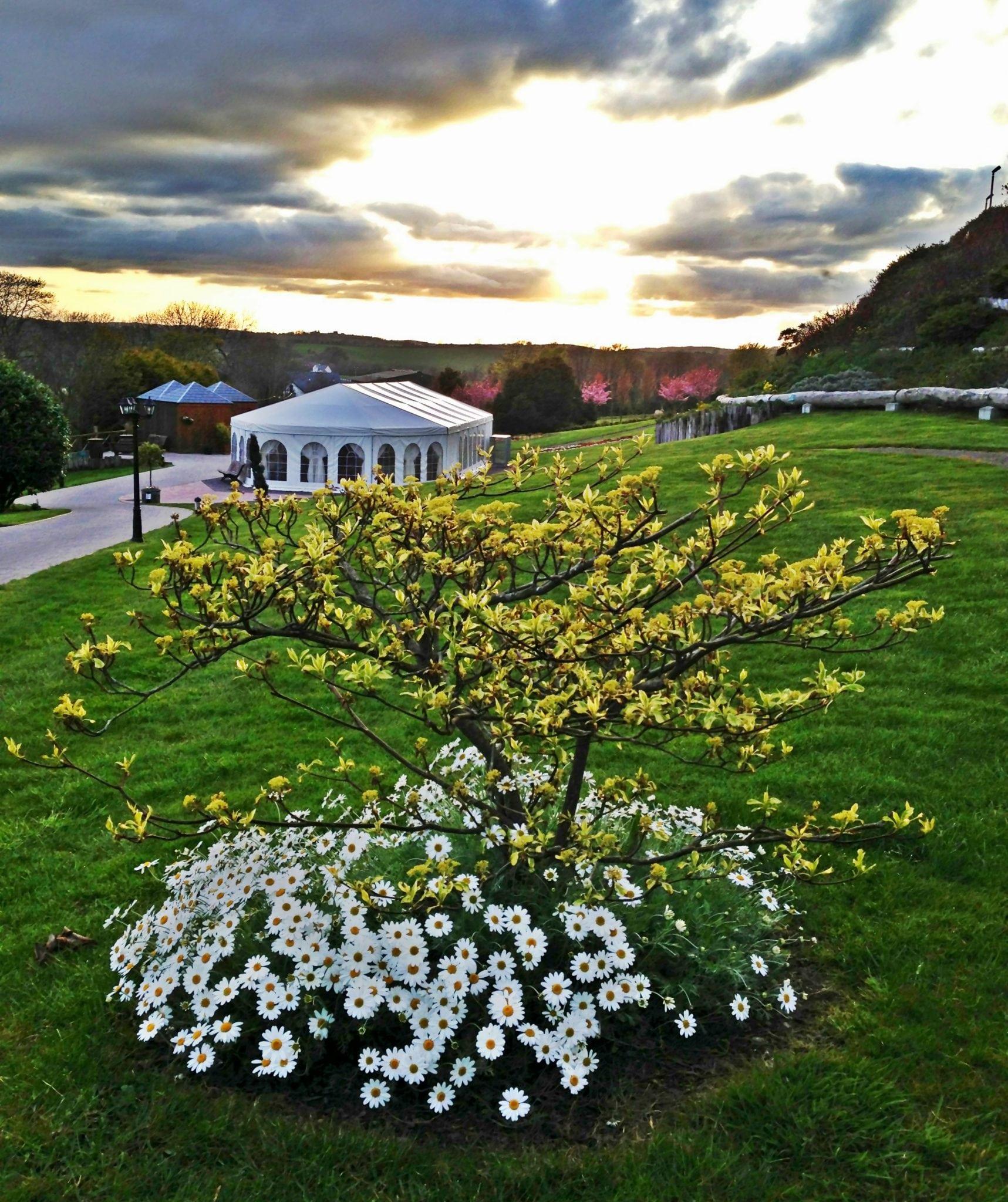 Fernhill garden c